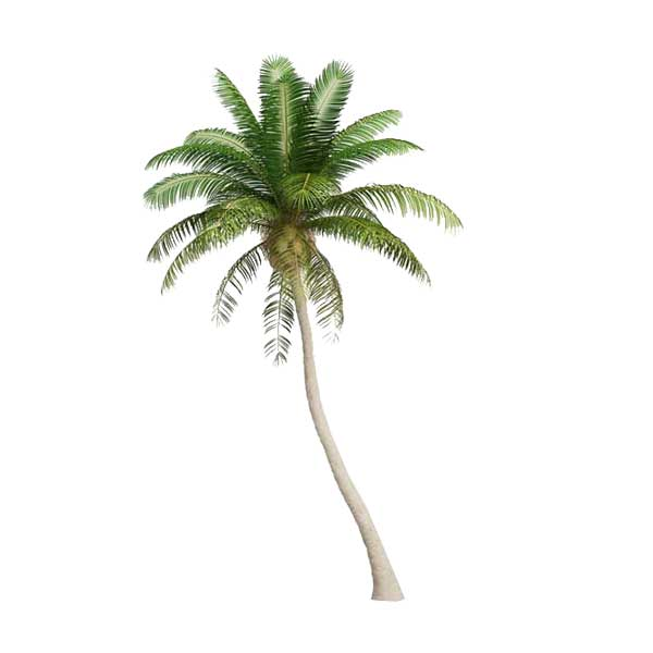 free palm tree 3d model download