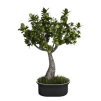 indoor plant 3d model free download no 21