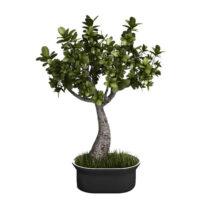 indoor plant 3d model free download no 21