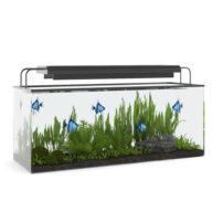 aquarium15 3d object
