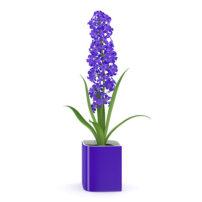 free 3d model flower 17