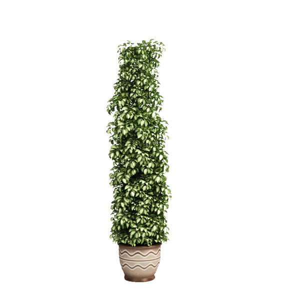 3d free model plant