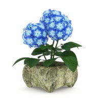 free 3d model flower 18