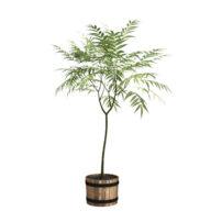free 3d plant model