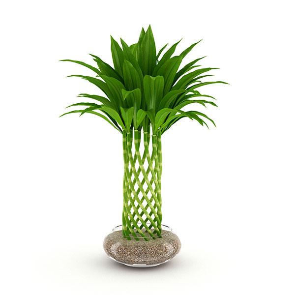 bamboo 3d model free