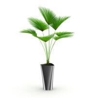 free 3d model plant no 43