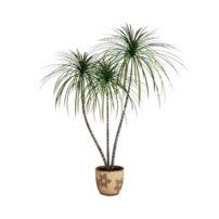 free plant 3d model no 23