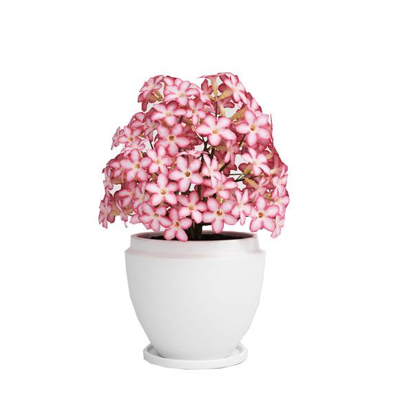 flower 3d model 24