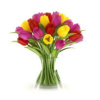 free 3d model tulip