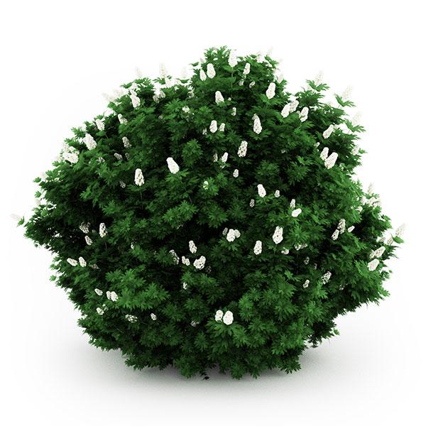 bush free 3d model