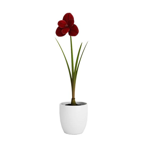 free 3d model flower no 26