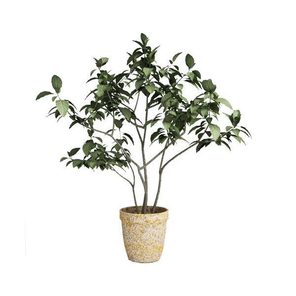 free 3d model flower28
