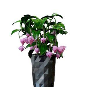 دانلود رایگان آبجکت گلدان تزیینی